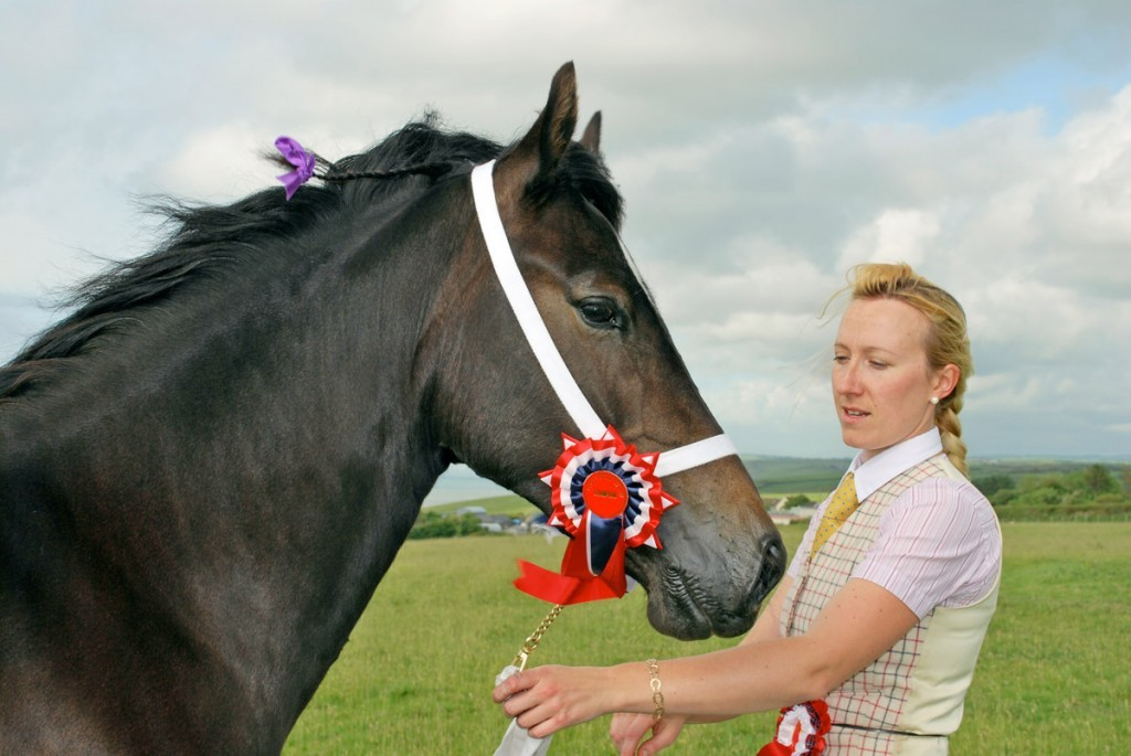 Welsh cob section D Aberaeron Alys - Menai Sparkling Imperial.
